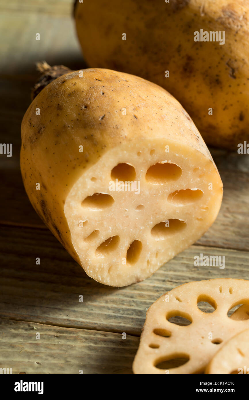 Raw Brown Organic Lotus Root Ready to Cook - Stock Image