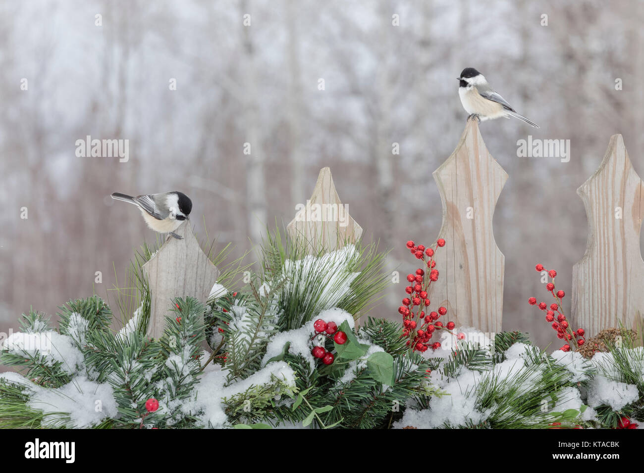 Black-capped chickadees on a festive backyard fence - Stock Image