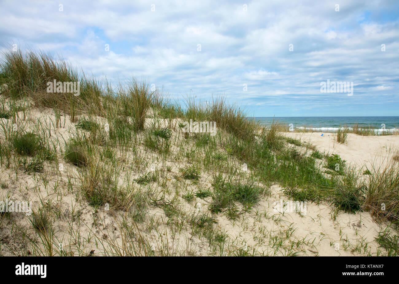 Marram grass and Baltic Sea at Baabe, Moenchgut-Granitz, Ruegen island, Mecklenburg-Western Pomerania, Baltic Sea, - Stock Image