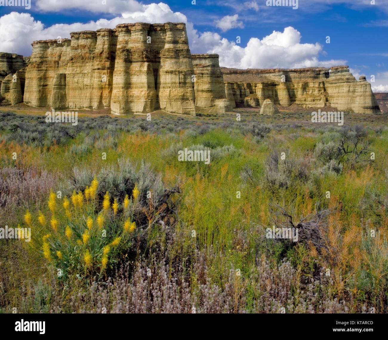Cumulus clouds pass over the Pillars of Rome and the spring bloom of Prince's Plume in SE Oregon's remote Malheur - Stock Image