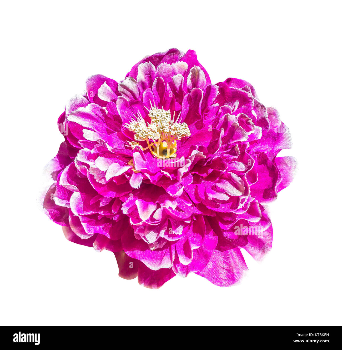 Magenta artificial flower isolated - Stock Image