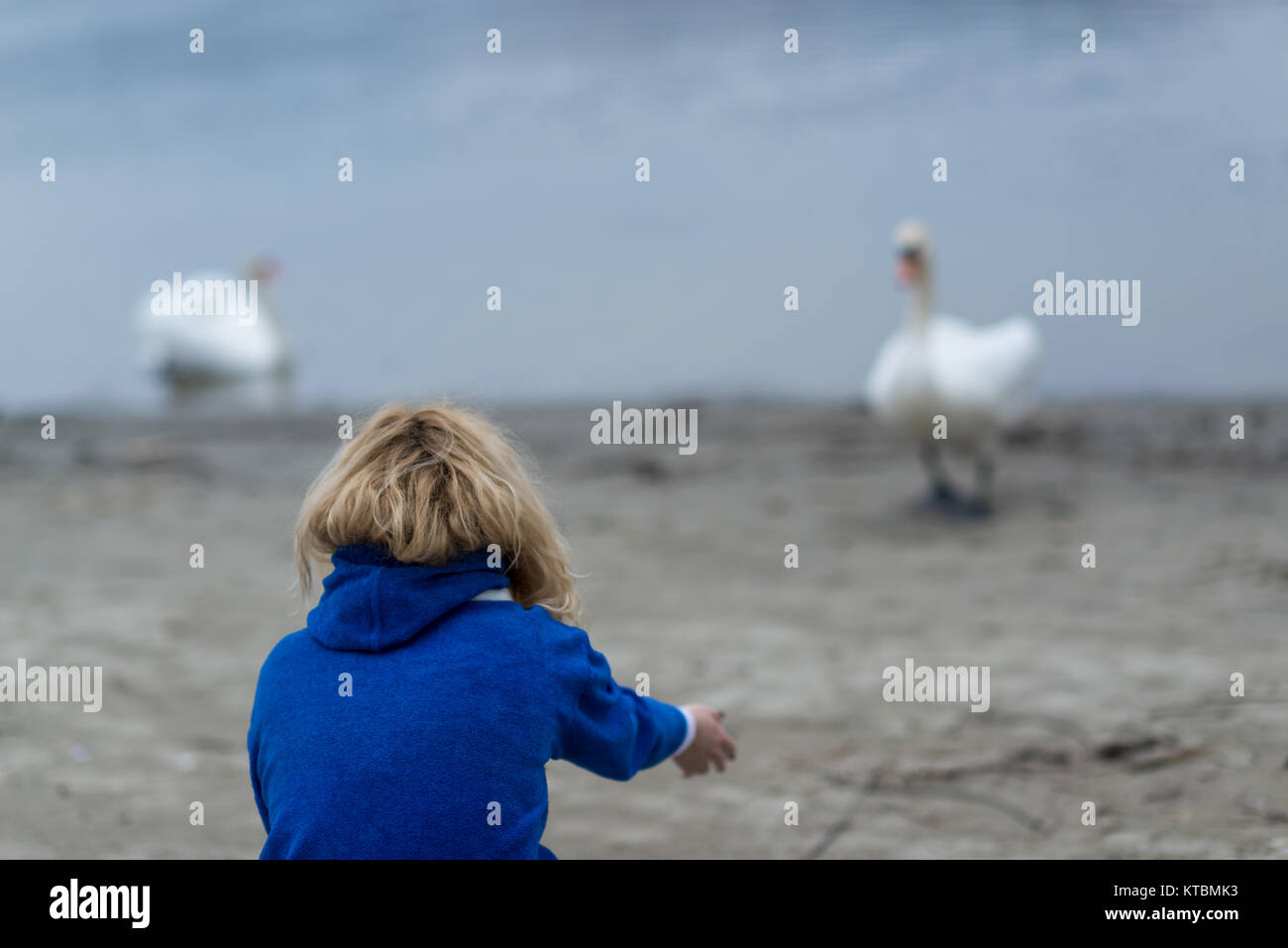 A girl is talking to swans - Stock Image
