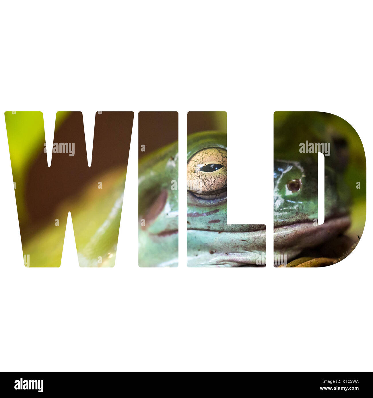 Word WILD frog in natural habitat - Stock Image