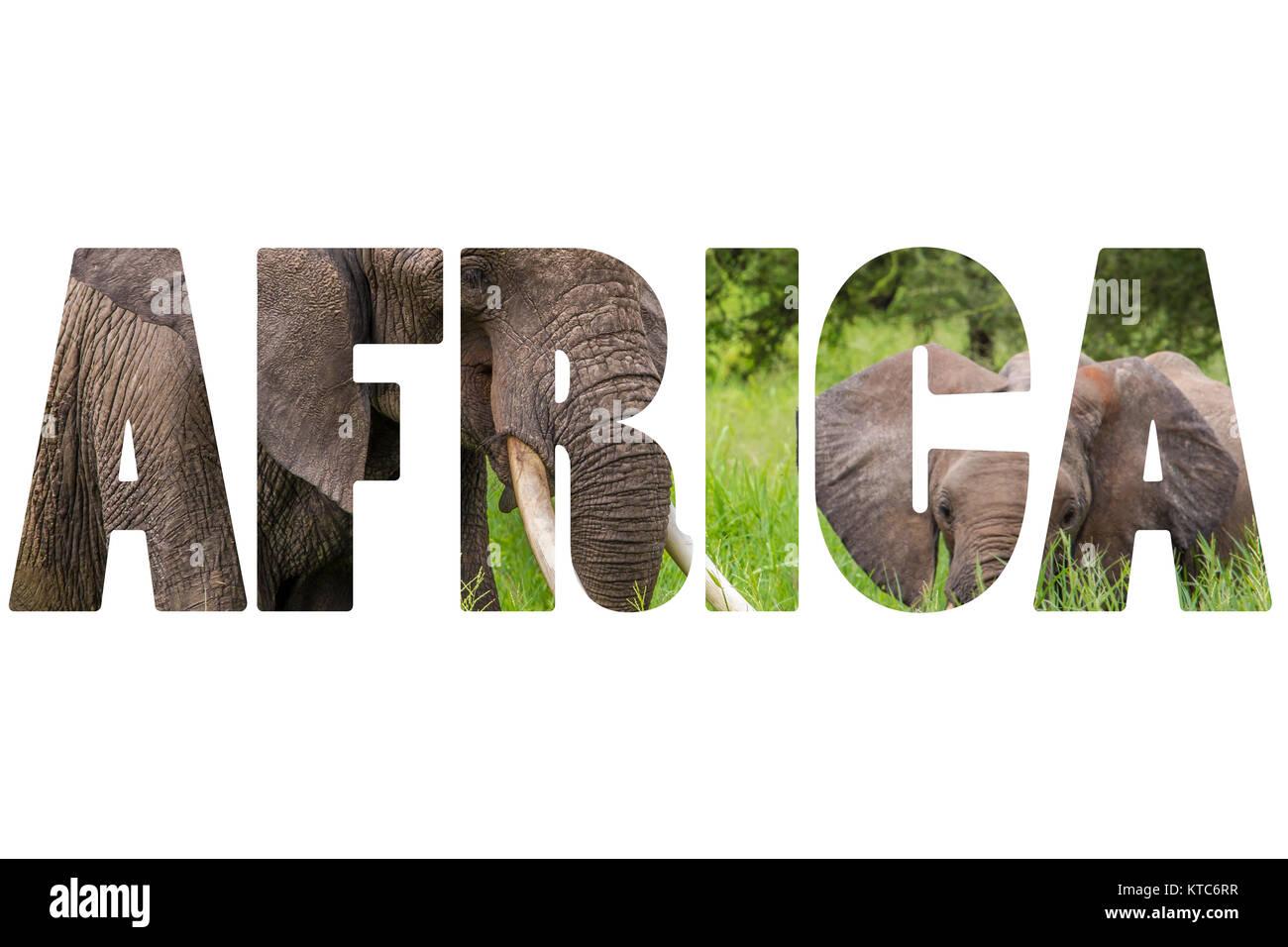 Word AFRICA over wild animals. - Stock Image
