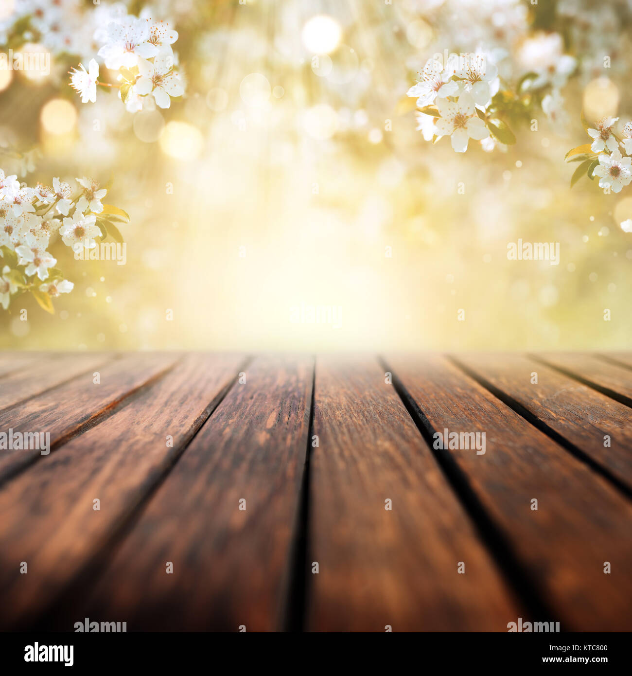 White blossoms in spring with sun rays and empty wooden table for a concept Stock Photo