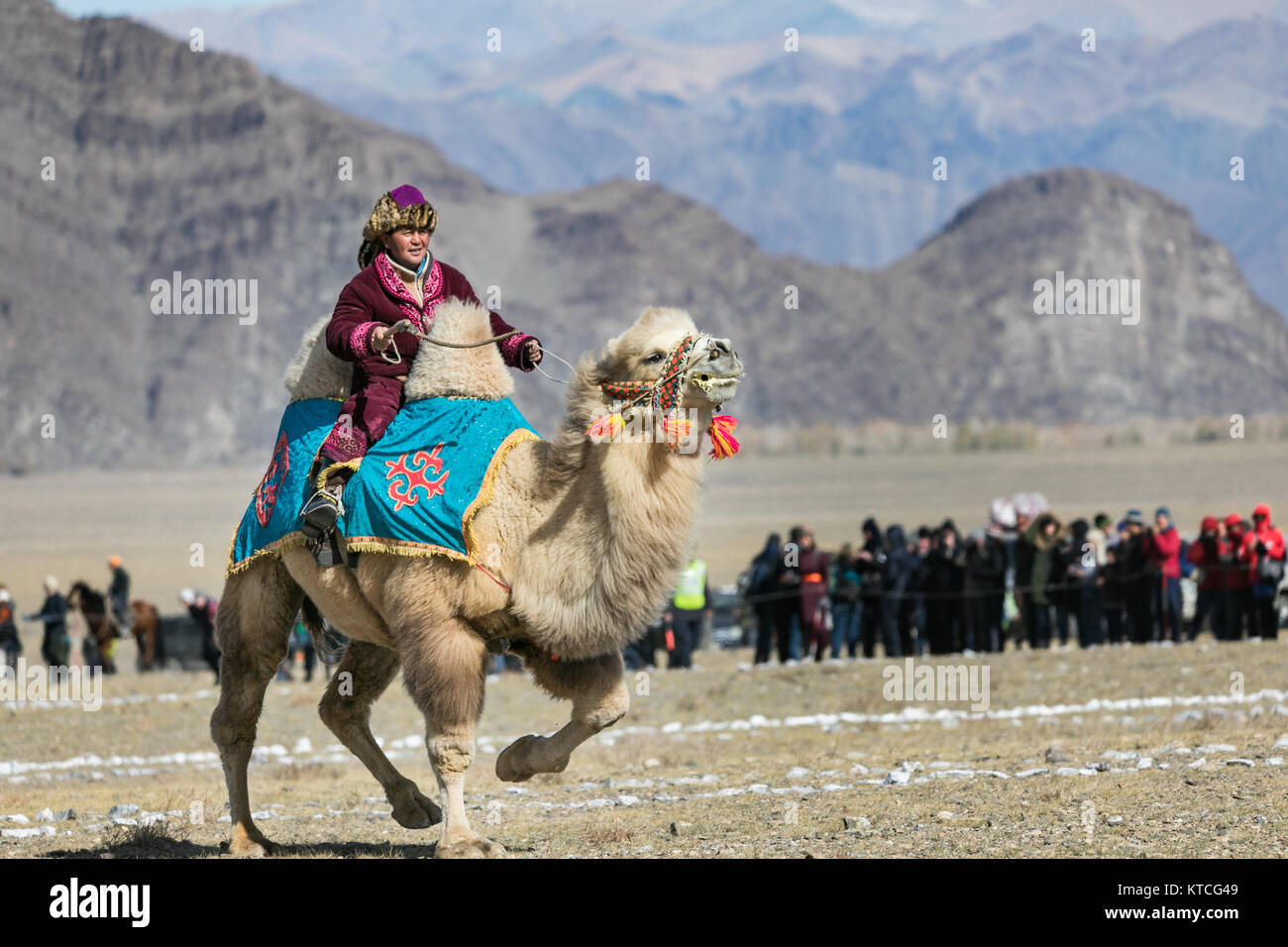 Camel rider at the Golden Eagle Festival in Mongolia - Stock Image