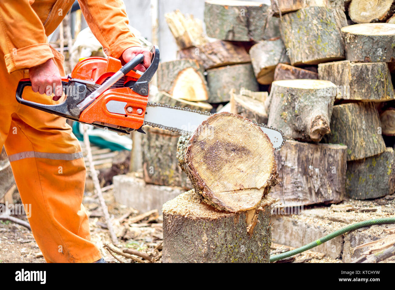 Lumberjack worker in full protective gear cutting firewood in forest with a professional chainsaw - Stock Image