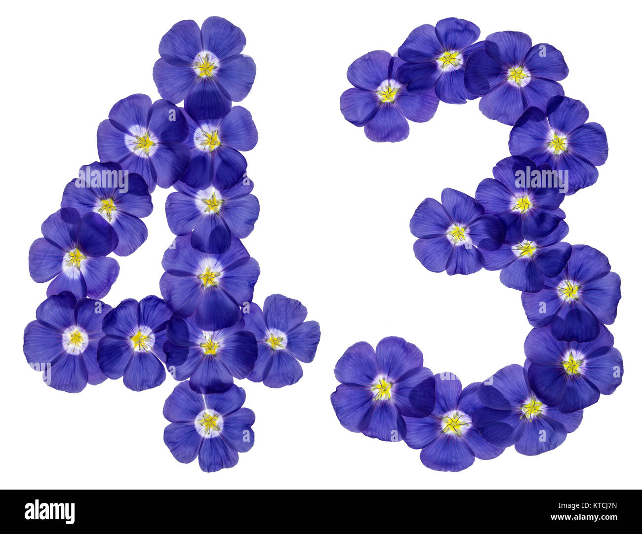 Arabic numeral 43, forty three, from blue flowers of flax, isolated on white background Stock Photo