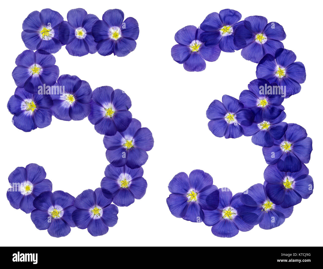 Arabic numeral 53, fifty three, from blue flowers of flax, isolated on white background Stock Photo