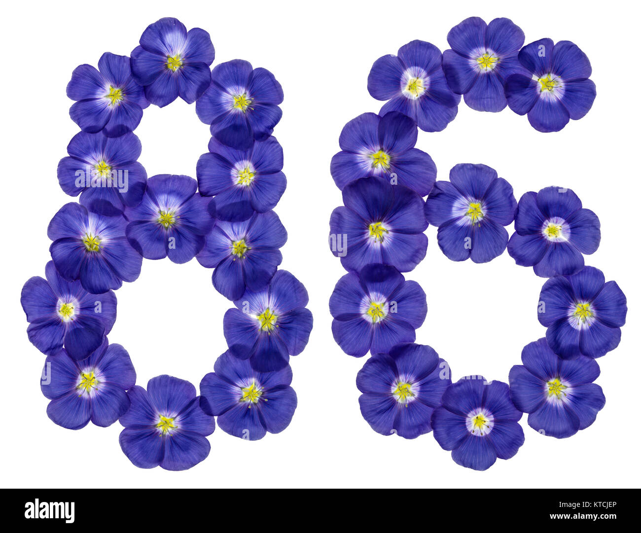 Arabic numeral 86, eighty six, from blue flowers of flax, isolated on white background Stock Photo