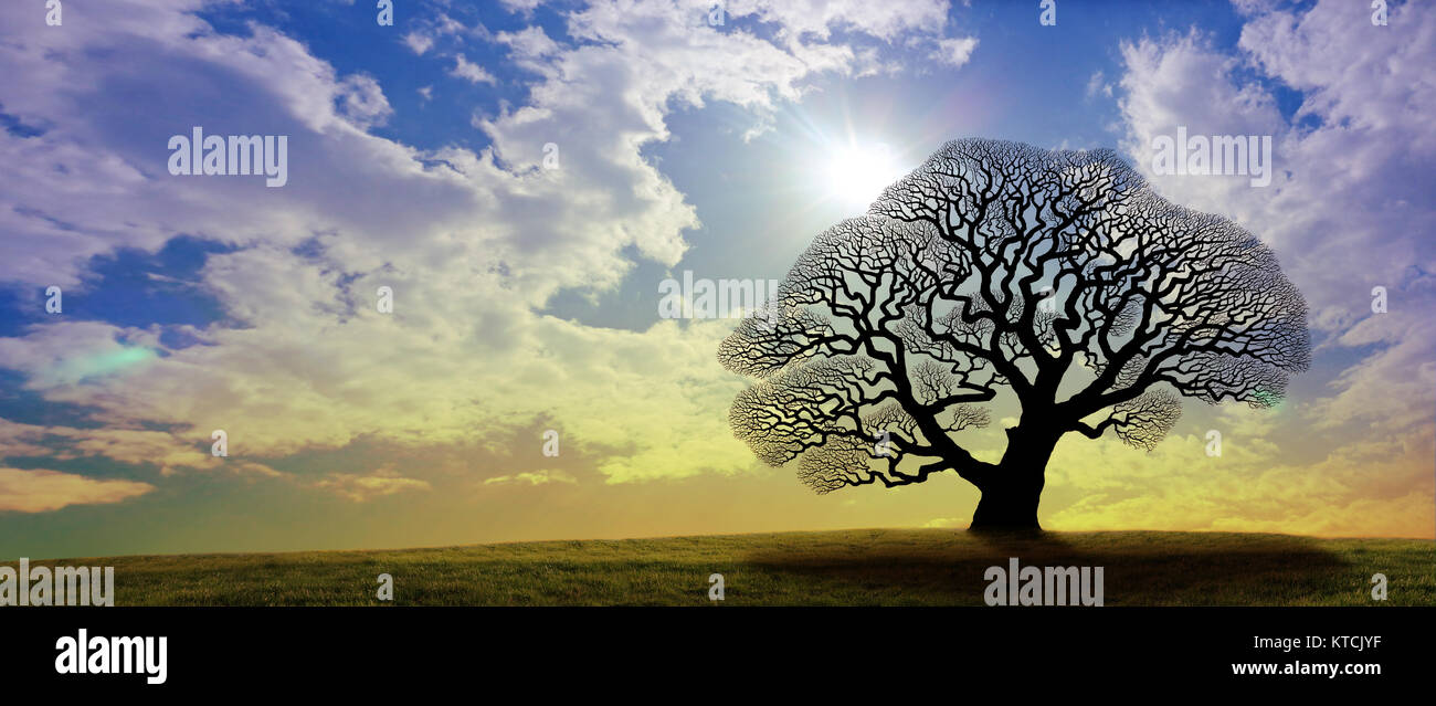Mighty Oak Tree - a black silhouette of a grand old oak tree with no leaves against a gold and blue wide sky with - Stock Image