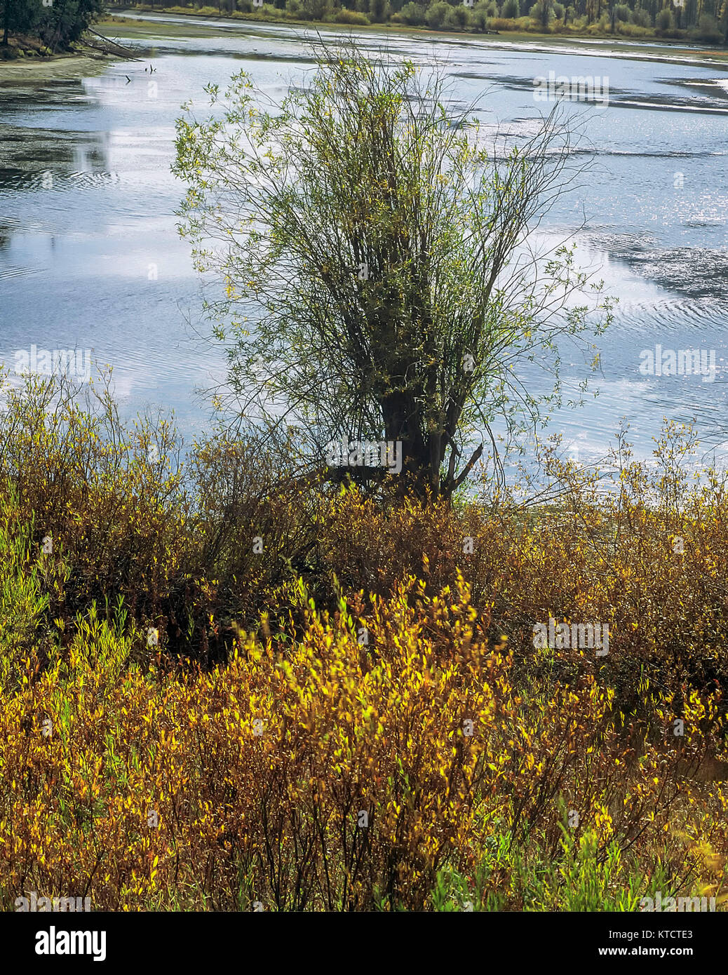 Lake in the landscape just outside the centre of Atlantic City, Wyoming,United states of America - Stock Image