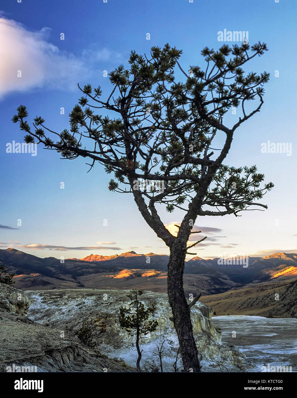 Lone tree and cloud in the Mammoth area of Yellowstone national park, United States of America - Stock Image