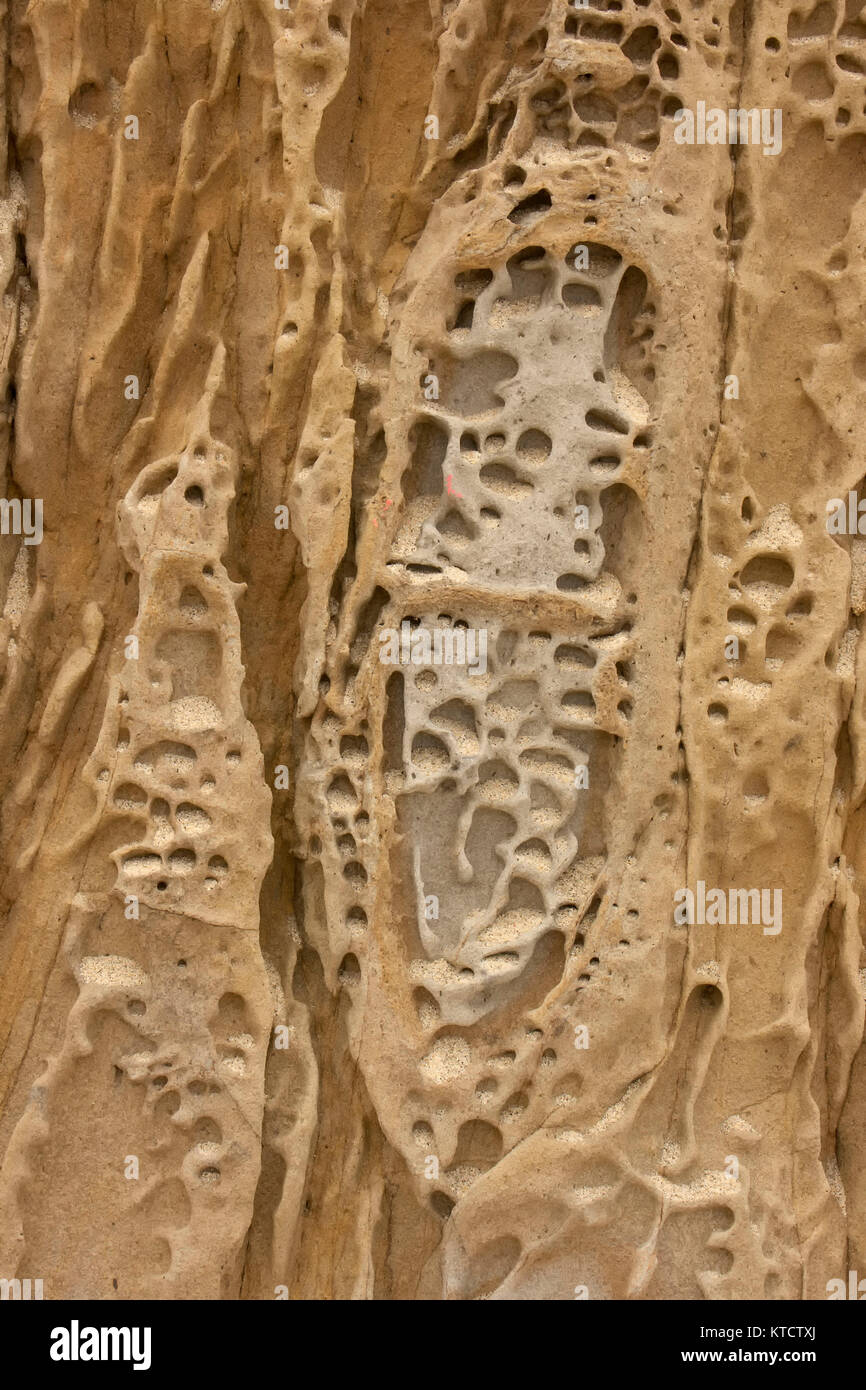 Weathered natural patterns in sandstone, Point Lobos, california, USA - Stock Image