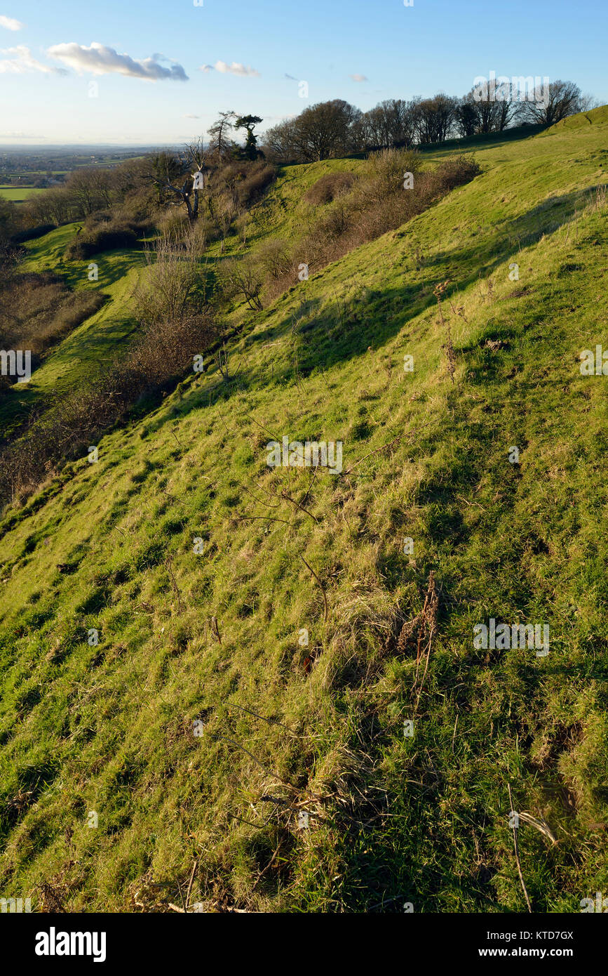 Evening Sun on Western Ramparts of Cadbury Castle Hill Fort, South Somerset - Stock Image