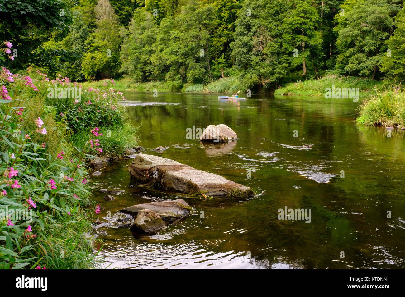 Drüsiges Springkraut, Faltboot, Fluss Regen, bei Regenstauf, Bayerischer Wald, Oberpfalz, Bayern, Deutschland Stock Photo