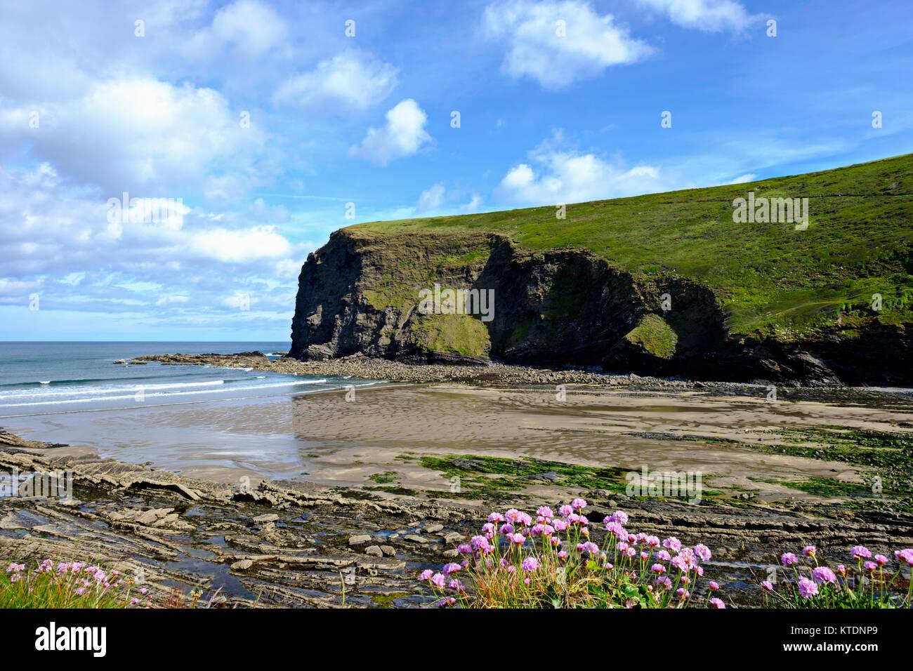 Bucht von Crackington Haven, Cornwall, England, Großbritannien - Stock Image