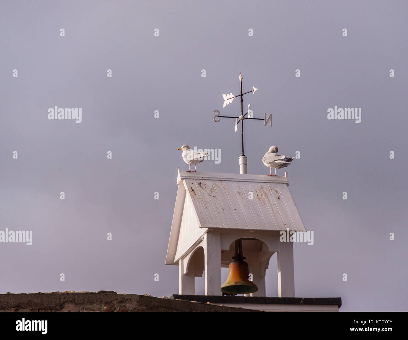 Seagulls sit on top of the clock tower in Connaught Gardens, Sidmouth. - Stock Image