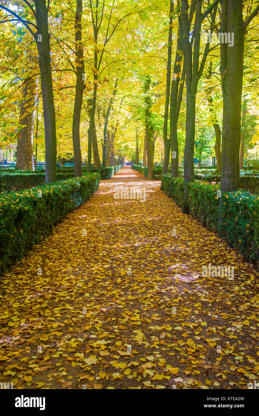 La Isla gardens in Autumn. Aranjuez, Madrid province, Spain. - Stock Image