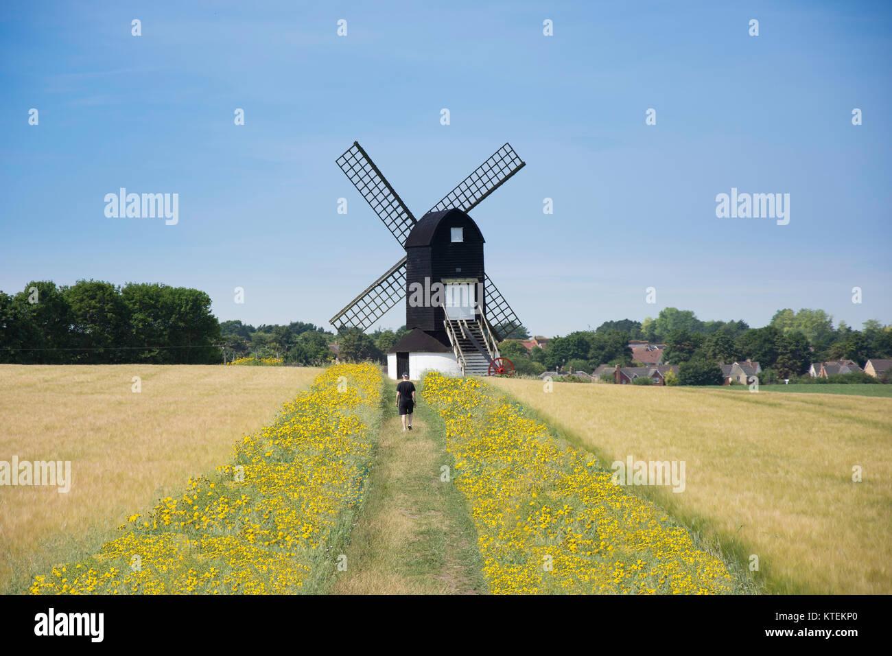 17th century The Pitstone Windmill, Pitstone, Buckinghamshire, England, United Kingdom - Stock Image