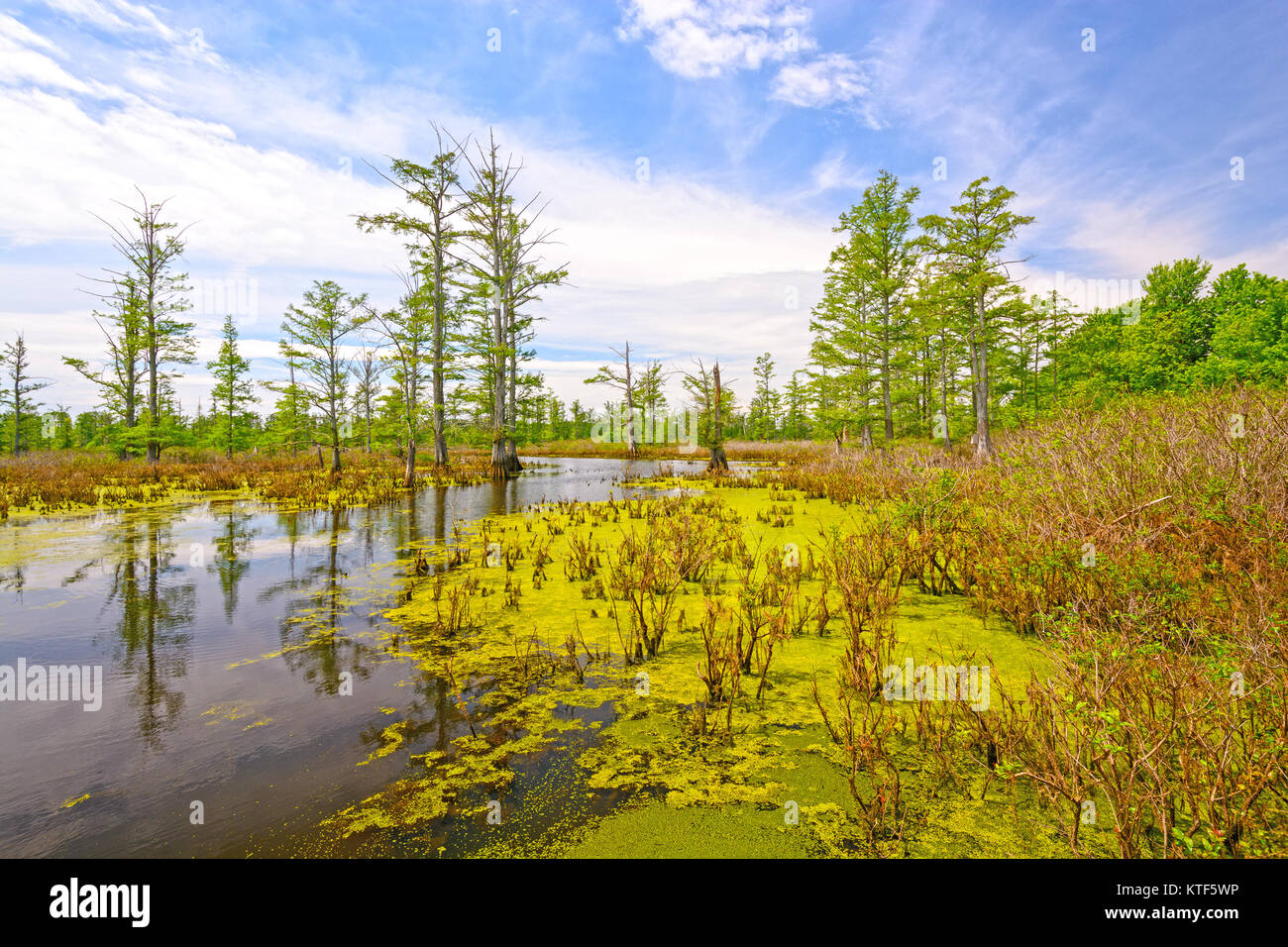 Cache River Cypress Swamp in Southern Illinois - Stock Image