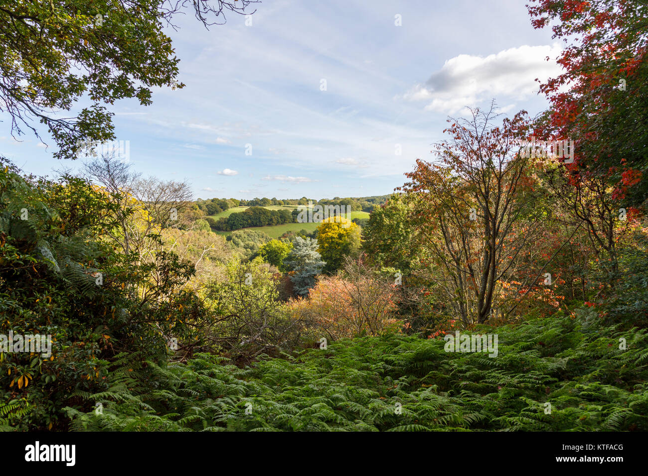 View over Surrey Hills Area of Outstanding National Beauty on a clear sunny day in autumn with blue sky and whispy - Stock Image