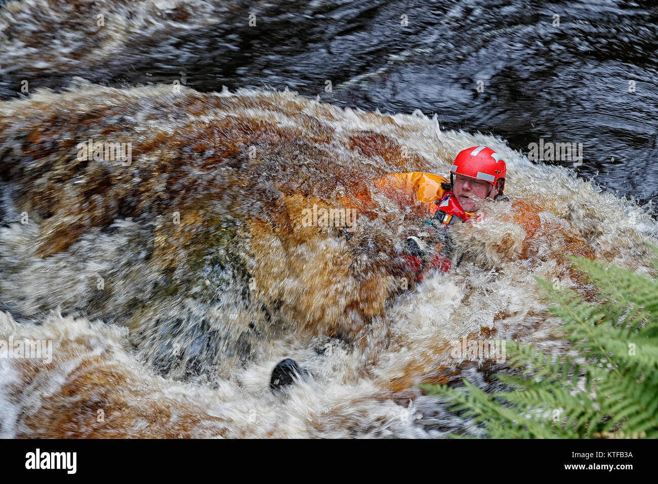 Upper Wharfedale Fell Rescue Association Swift Water Team member taking part in a training exercise in the fast - Stock Image