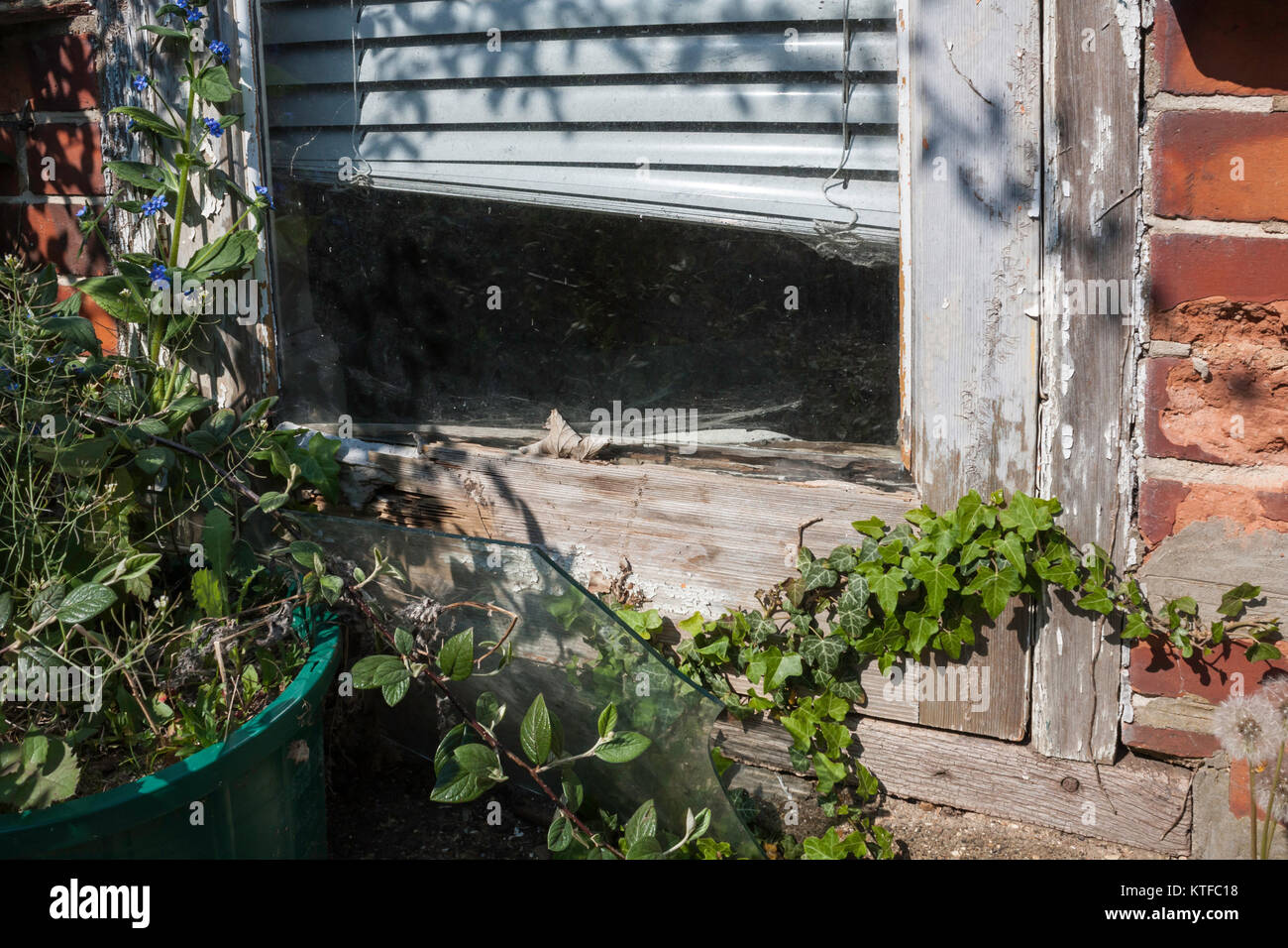 Patio door frame in severe state of dilapidation and over grown with ivy - Stock Image