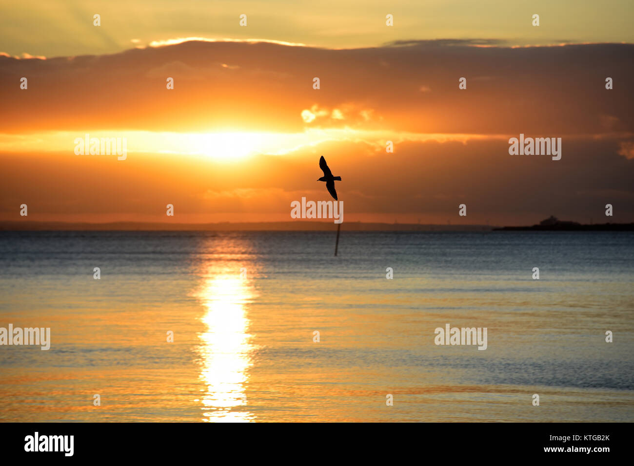 Seagull flying on the foreshore Southend on Sea Essex seafront at sunset. Setting sun reflected in the water of - Stock Image