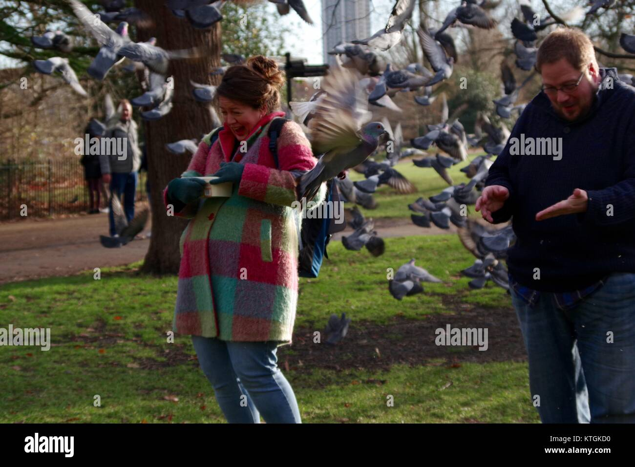 Pigeon Flock Takes to the Air, Surprising a Pair of Bird Feeders in Kensington Garden, London, UK. December 2017. - Stock Image
