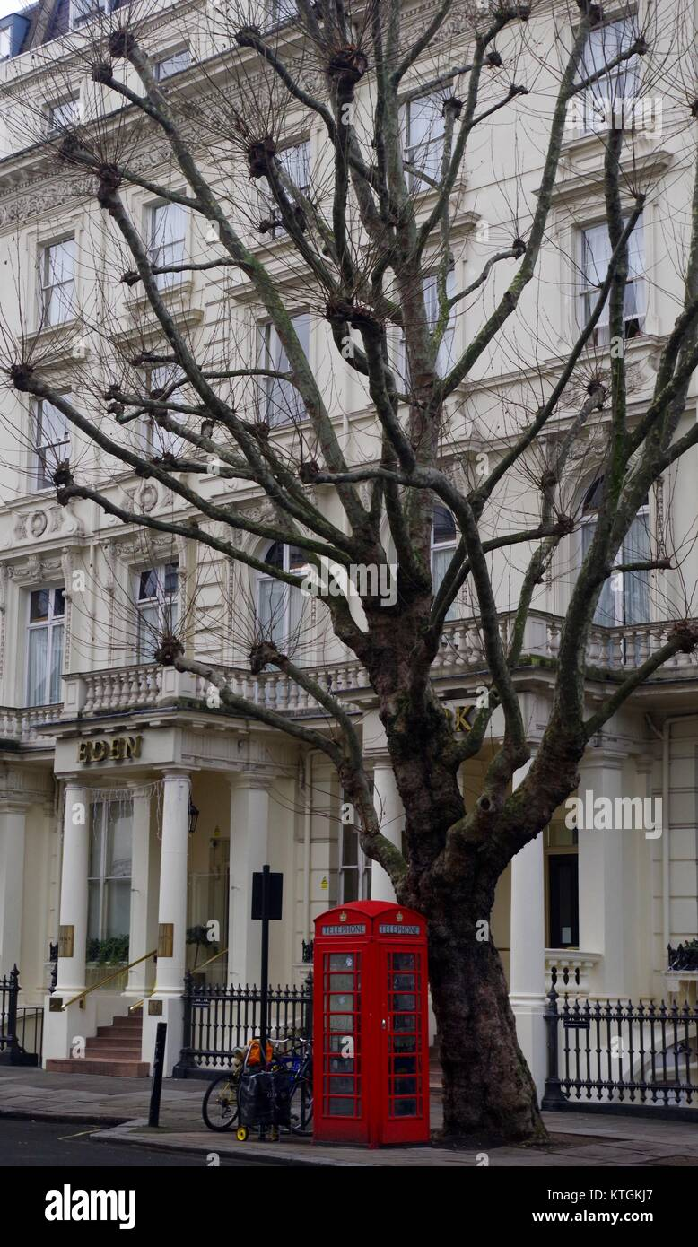 London Property and Traditional Red Telephone Box Under London Plane Tree, Inverness Place, London, UK. December - Stock Image