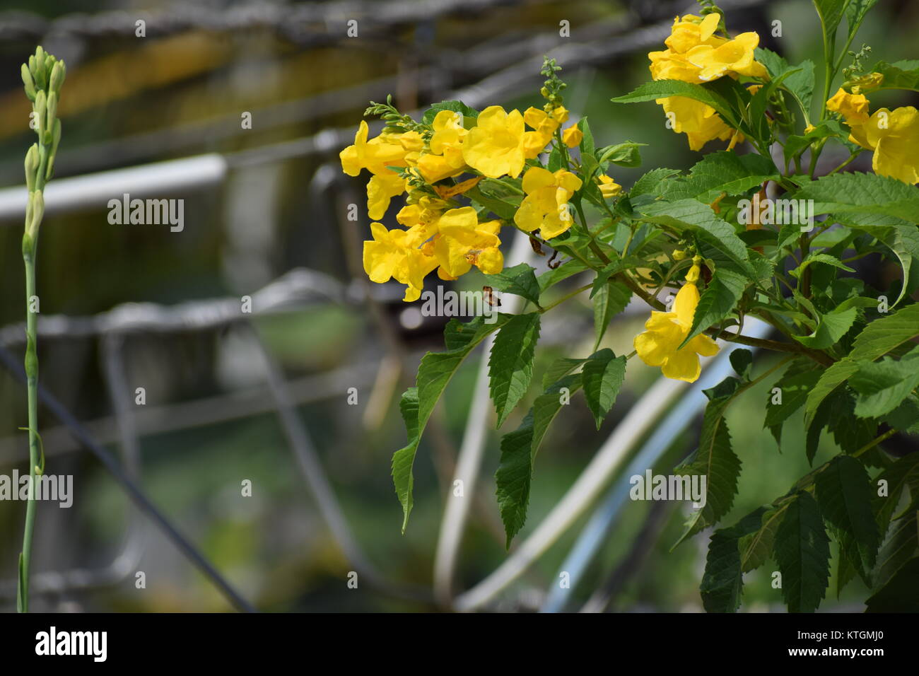 good photographs and stock images 4k hd - Stock Image