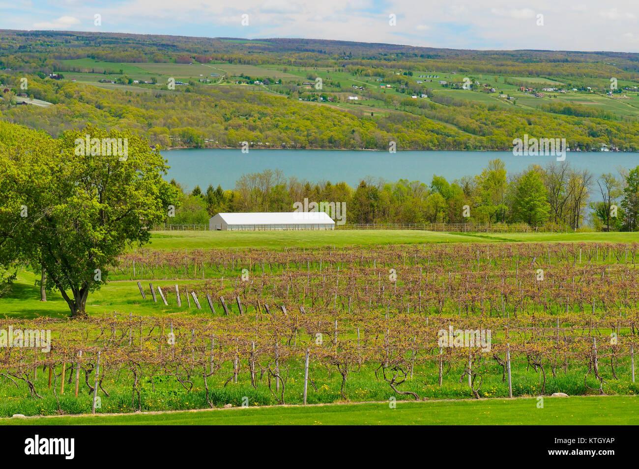 Glenora Wine Cellars Finger Lakes Dundee New York USA  sc 1 st  Alamy & Glenora Wine Cellars Finger Lakes Dundee New York USA Stock ...