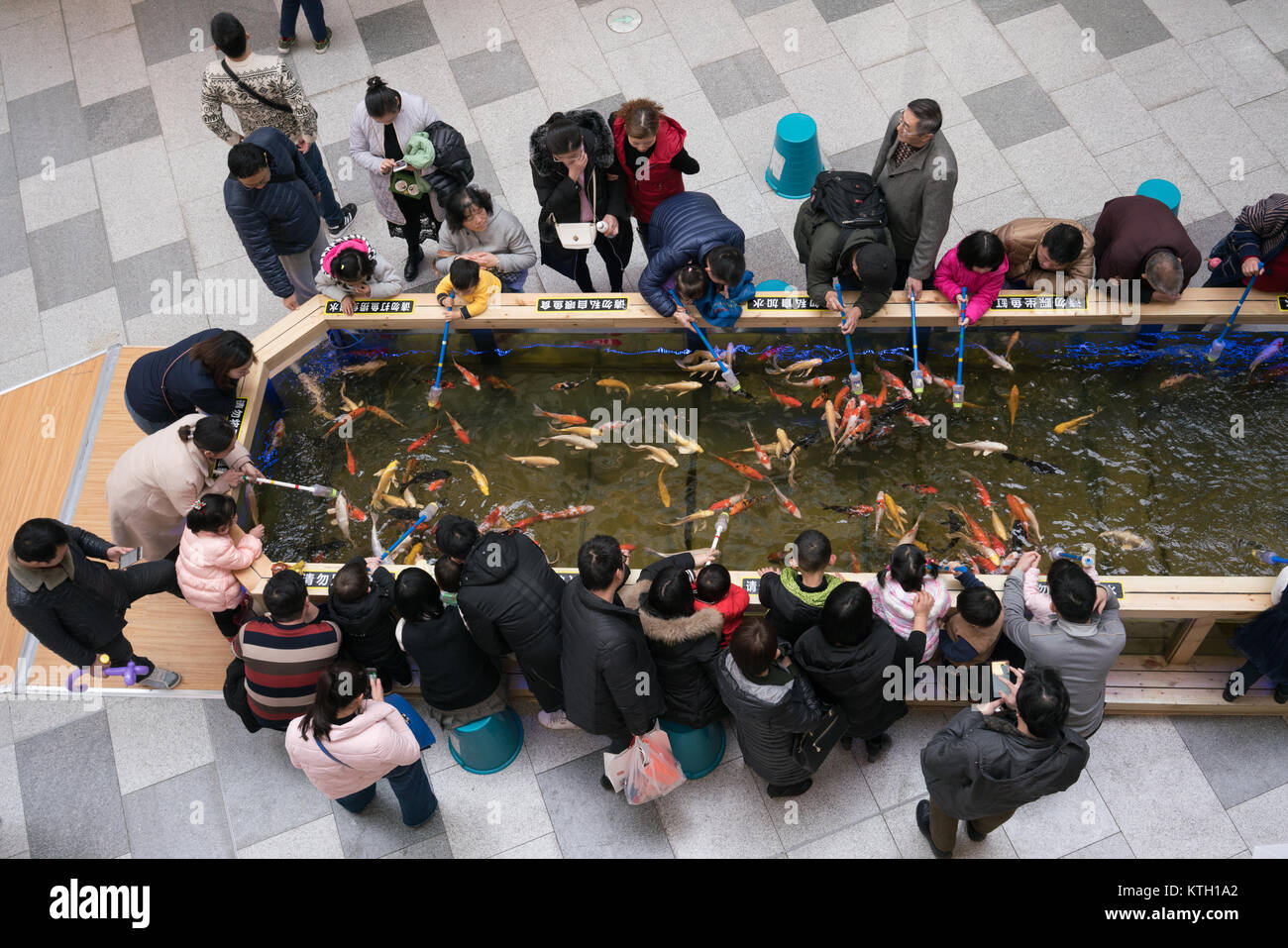 Wuhan Hubei China, 24 December 2017: People feeding Koi amur carp in a pond with fish food inside a shopping mall - Stock Image
