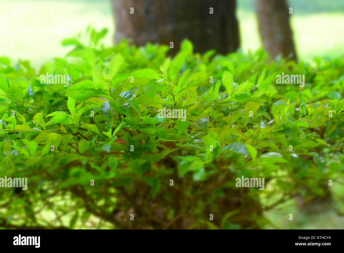 Green Leaves Hd Wallpaper Stock Photos Green Leaves Hd