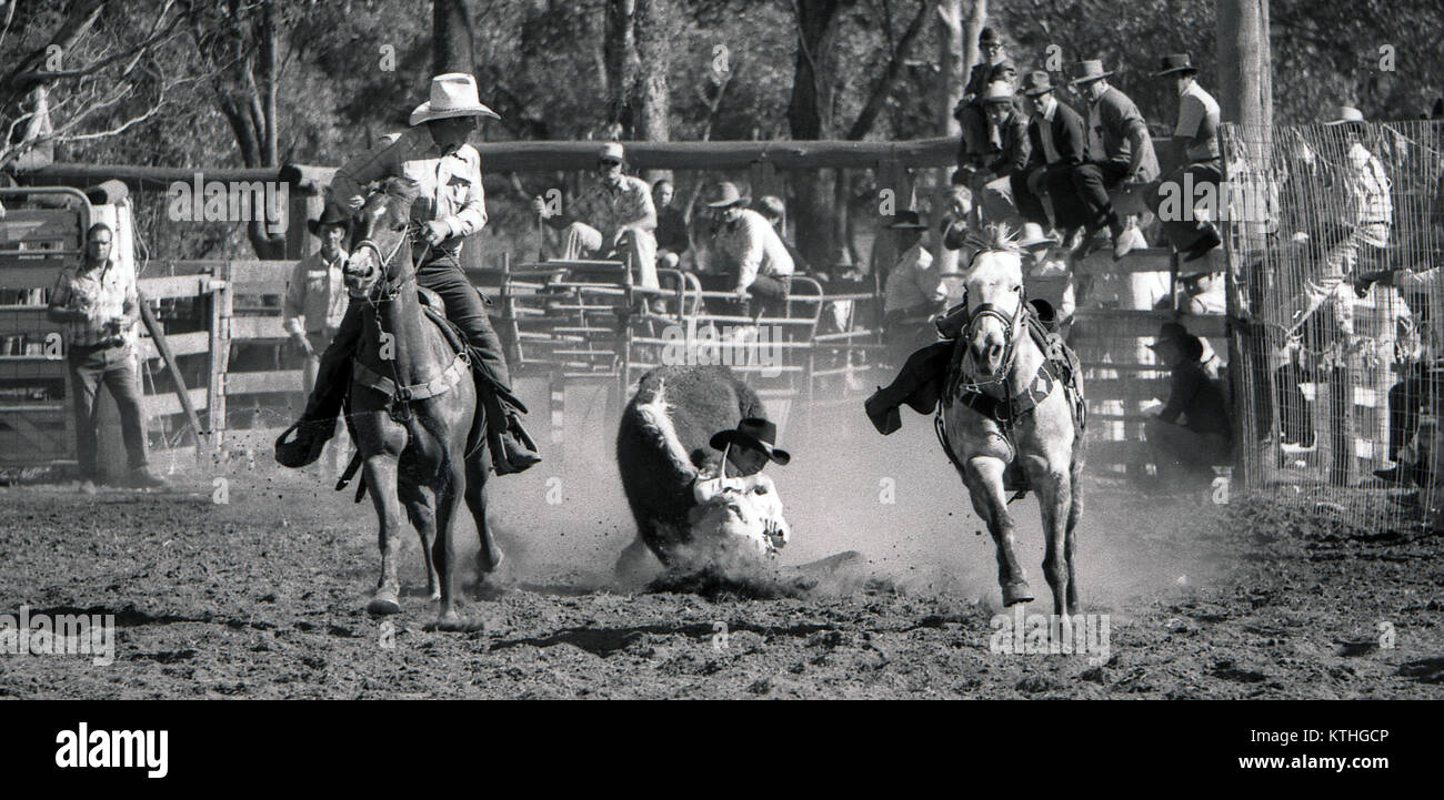 PROSTON, AUSTRALIA, CIRCA 1980: Unidentified competitor lands with his steer in the bulldogging event during a small Stock Photo