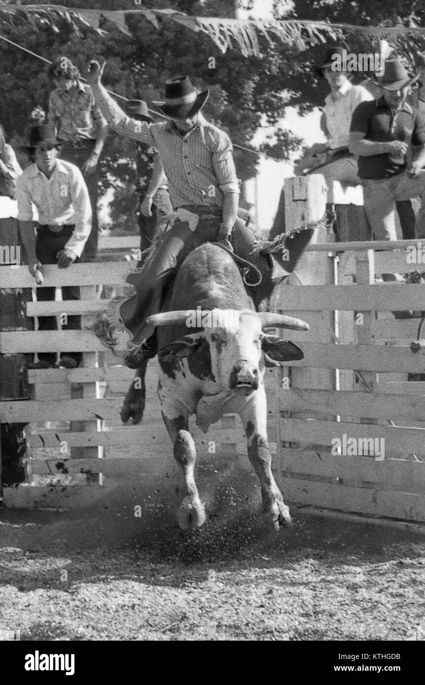 KINGAROY, AUSTRALIA, CIRCA 1980: Unidentified contestant rides a bull during a small town rodeo, circa 1980 in Kingaroy, Stock Photo