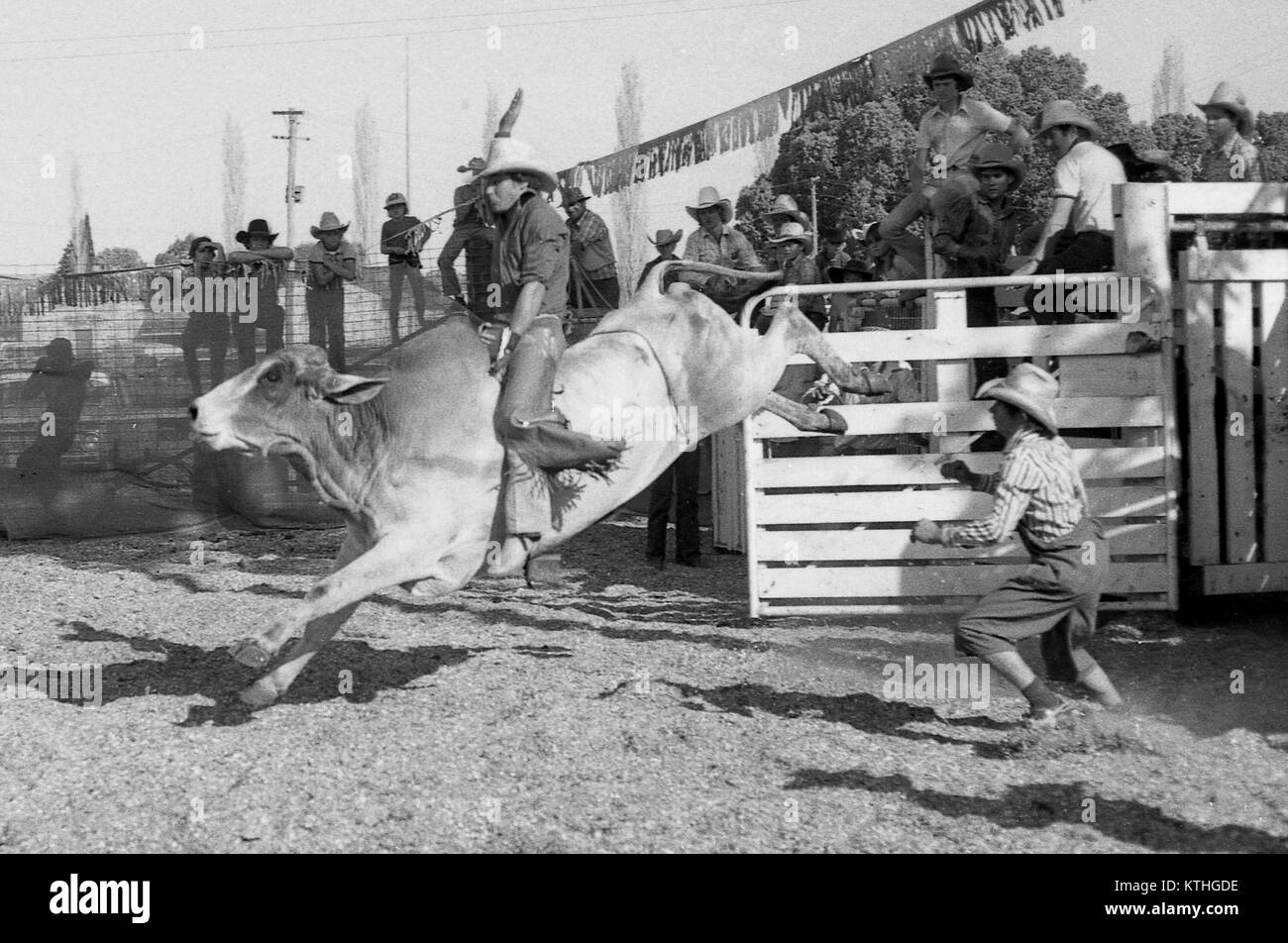 f7f26c64a Bull Bull Riding Black and White Stock Photos & Images - Alamy