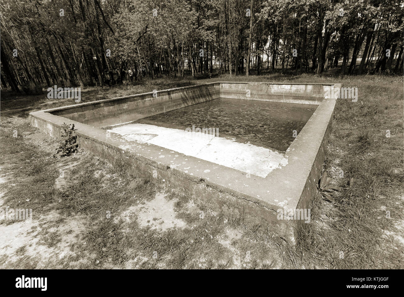 Old Swimming Pool Located In The Forest On A Glade In An Abandoned Stock Photo Alamy