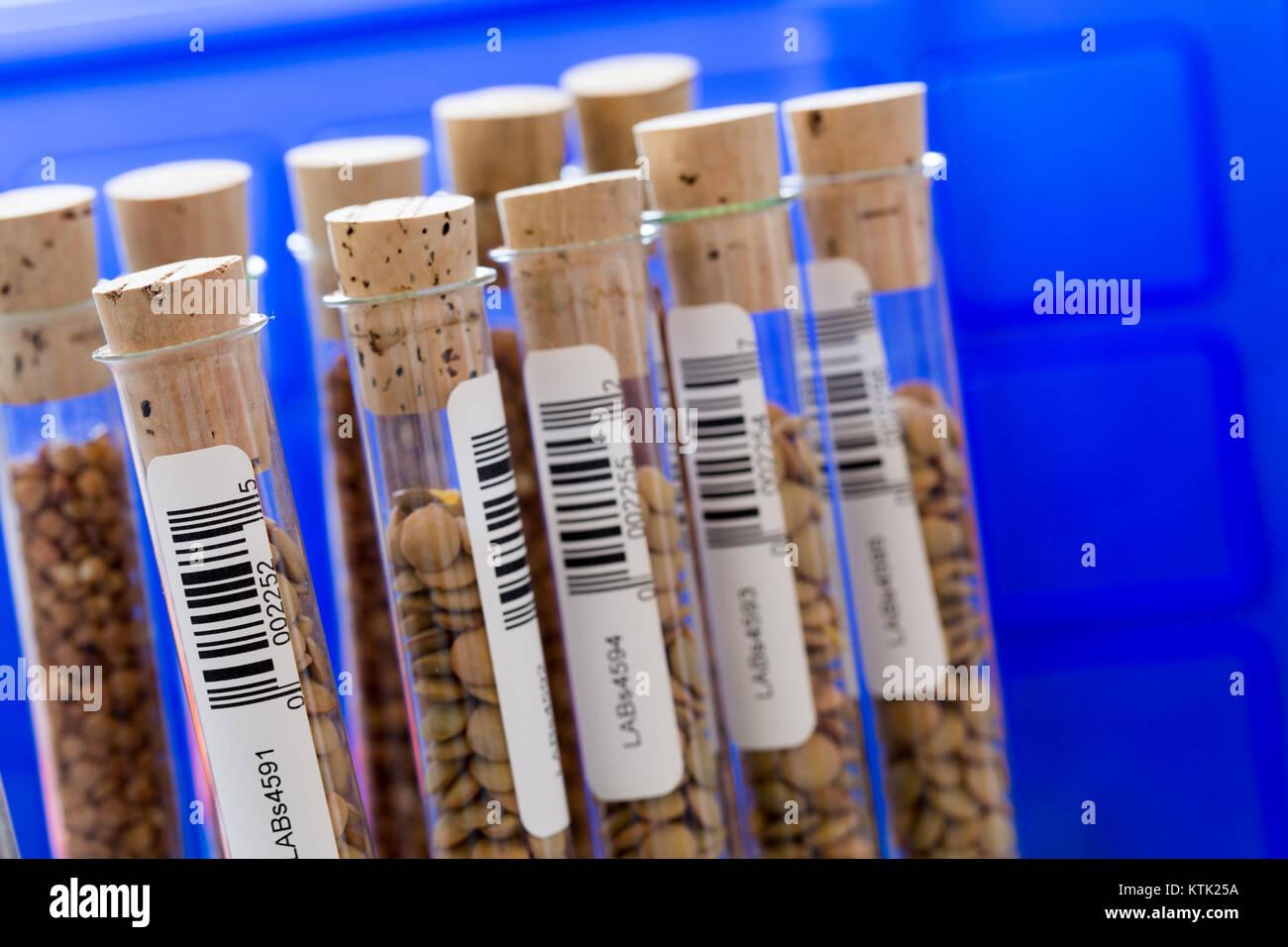 gene banks plants - Stock Image