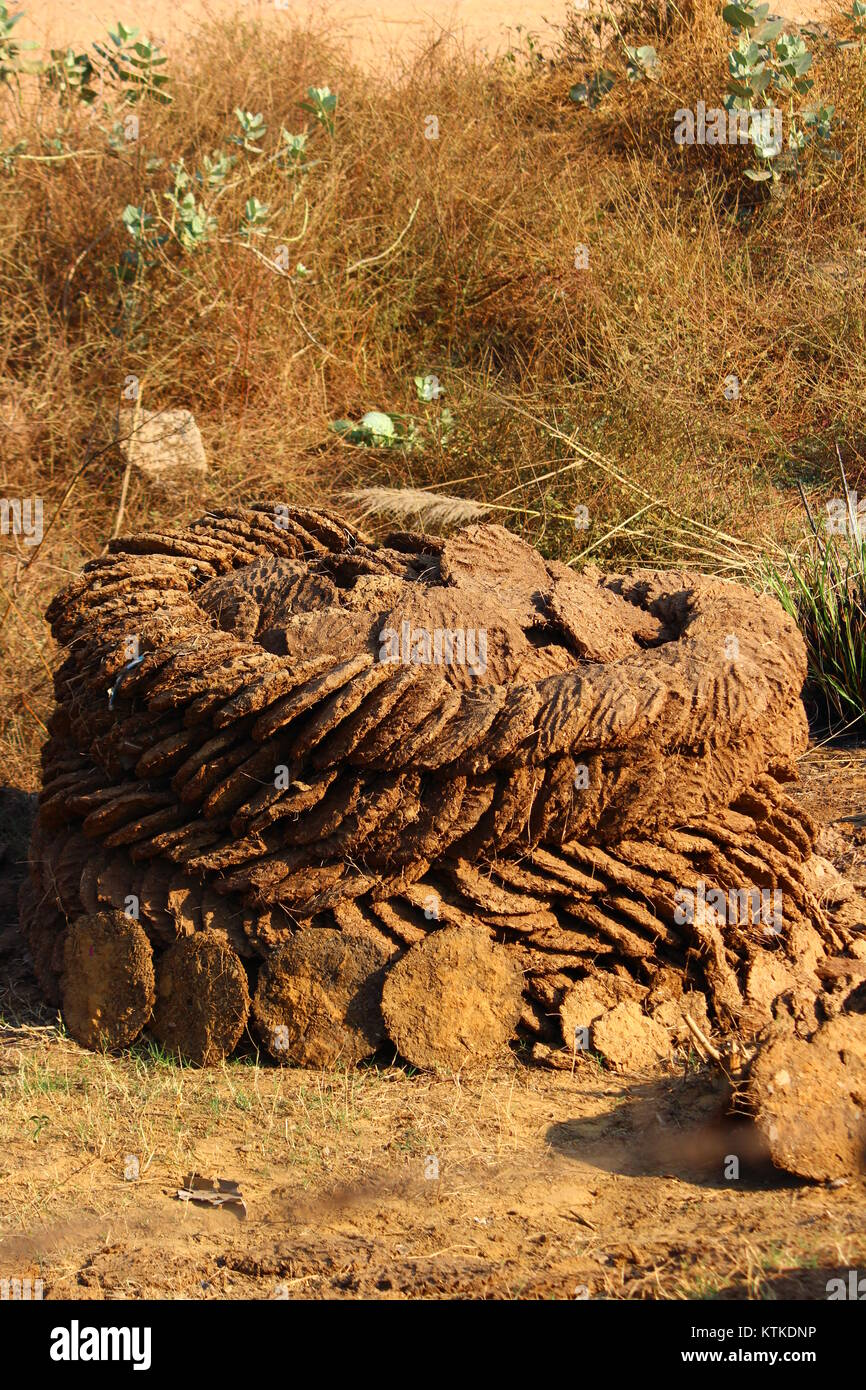 Sun dried Cow dung cakes stored in rural India - Stock Image