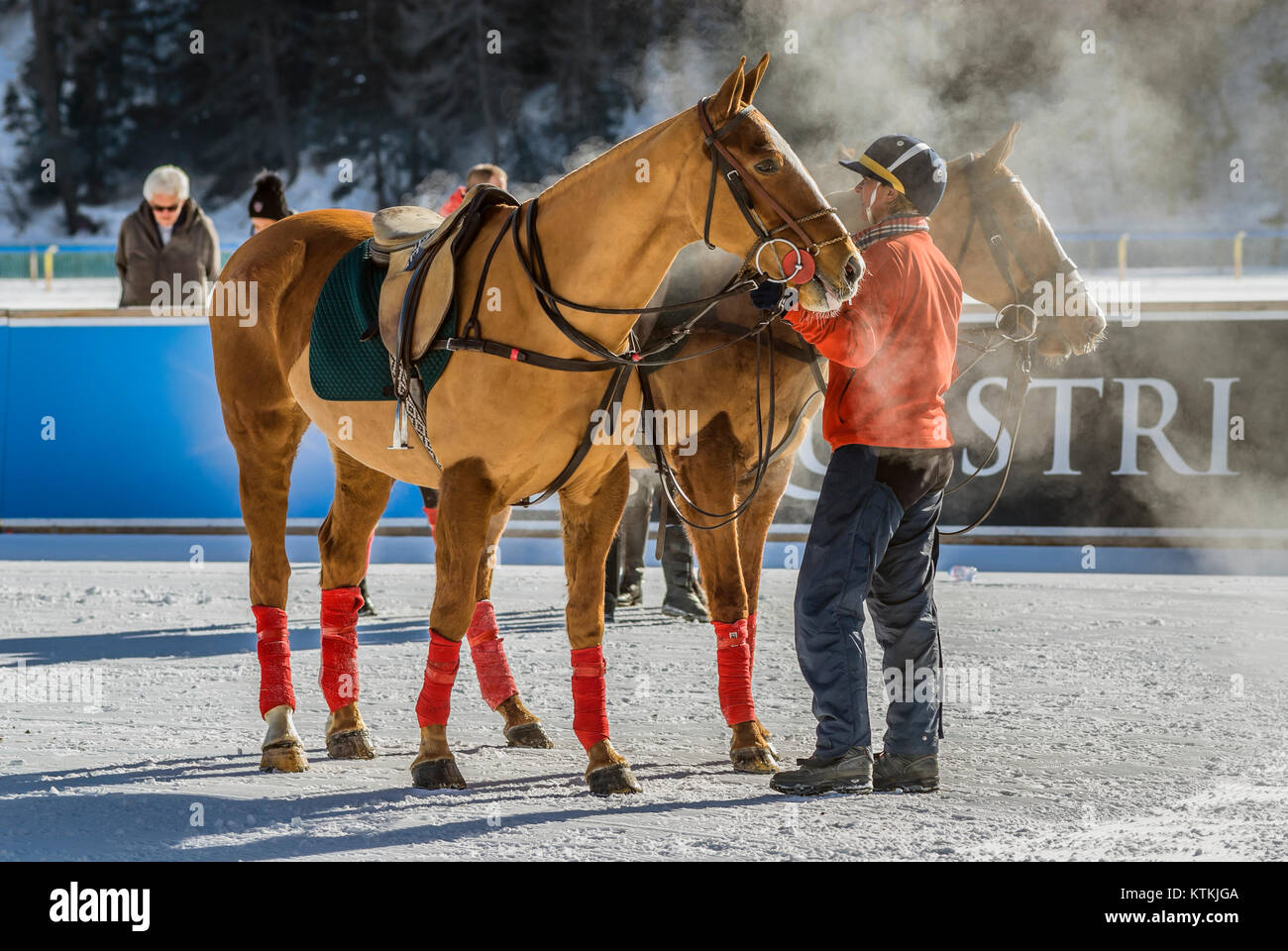 Polo Horses during the Snow Polo Game France-Germany during the Polo World Cup in St Moritz, Switzerland.  Polo - Stock Image