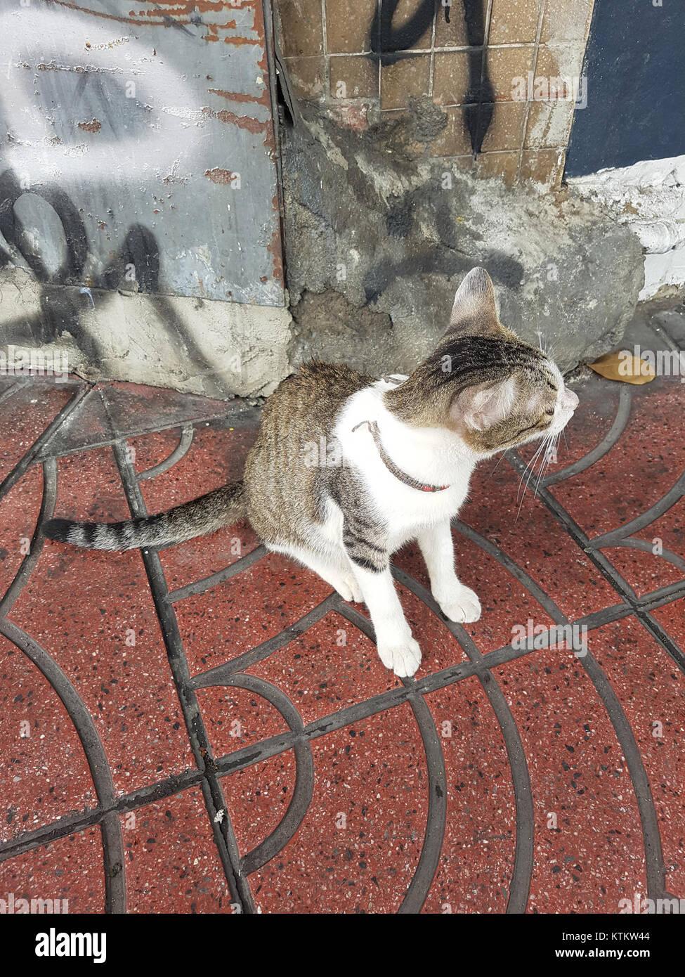 Bangkok kitty   2017 05 12 (001) - Stock Image