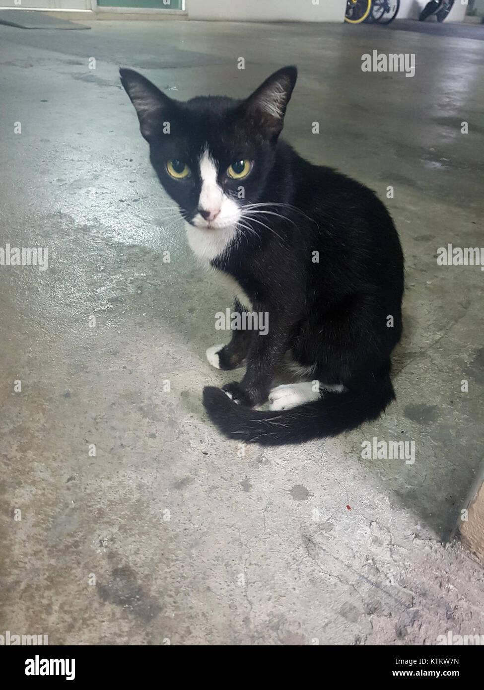 Bangkok kitty   2017 05 13 (001) - Stock Image