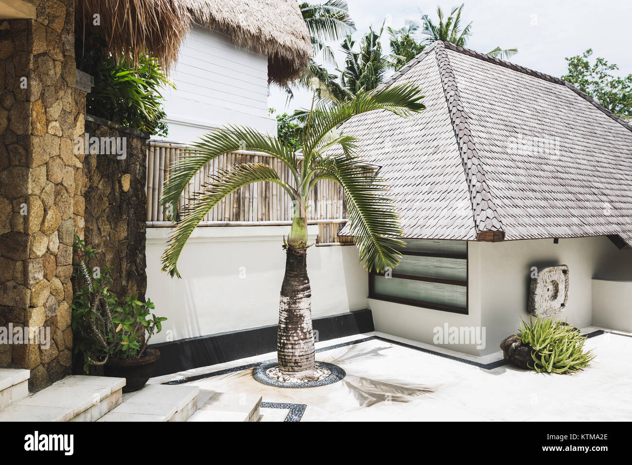 Decorative Small Palm Tree On White Background Wall In House