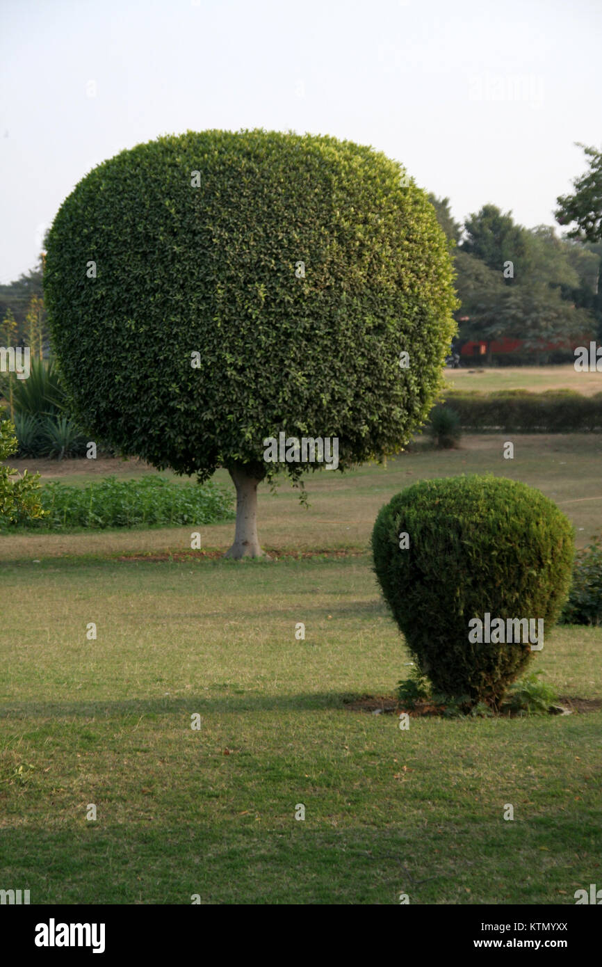 Geometrically trimmed plants in spherical and conical forms - Stock Image
