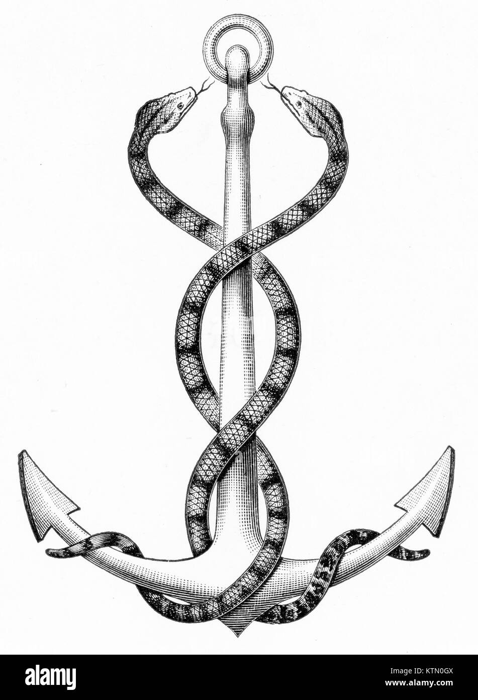 Engraving of two snakes entwined around an anchor. From an original engraving in Outlines of Zoology by Thomson, - Stock Image