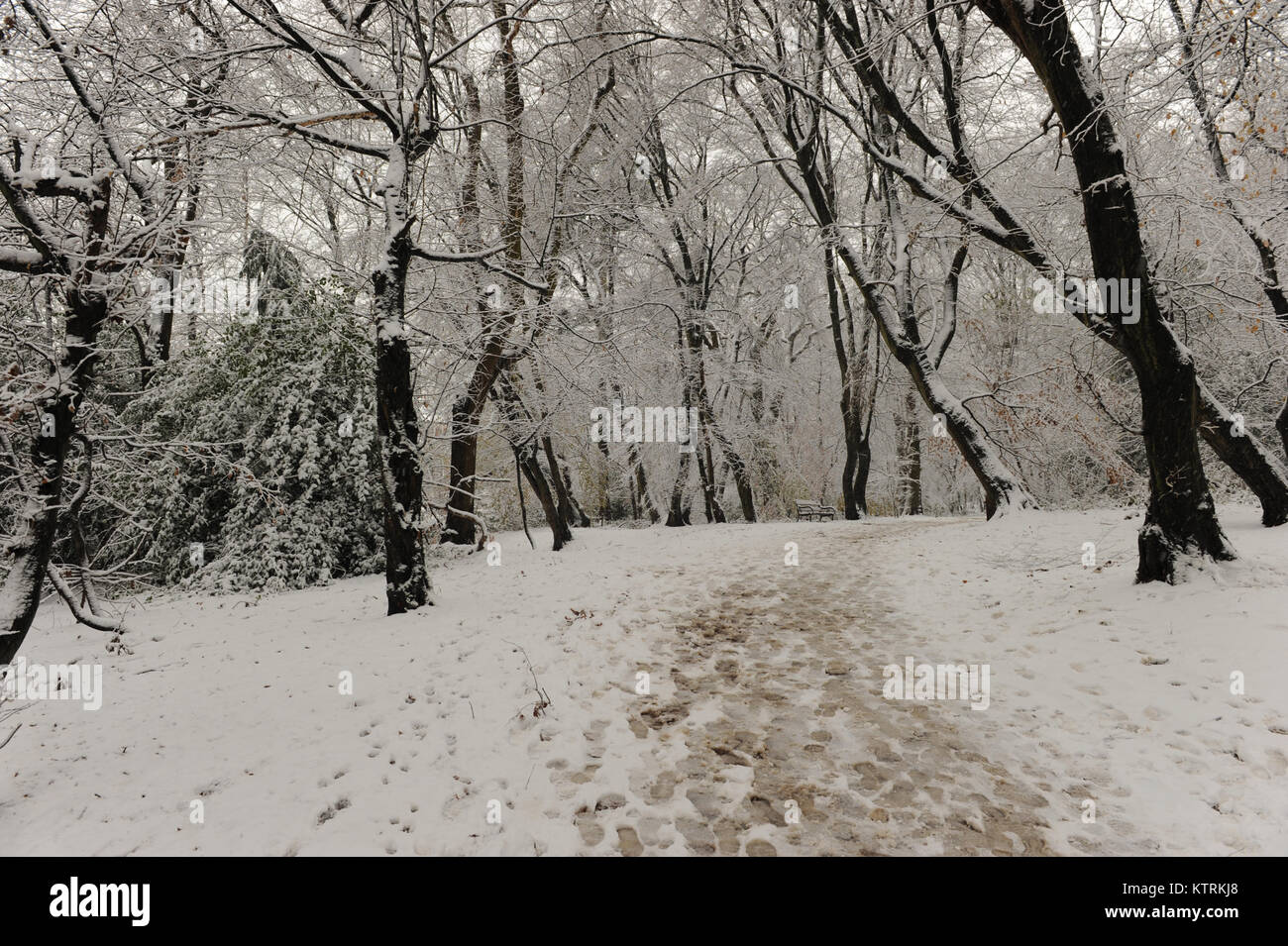 Highgate wood in the snow on December 10 2017 Stock Photo