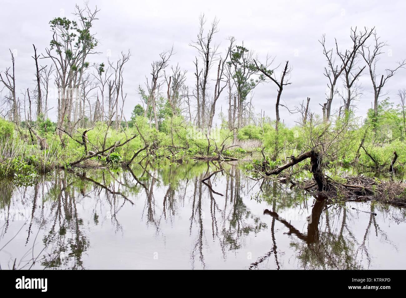 Swamp in Spring Stock Photo