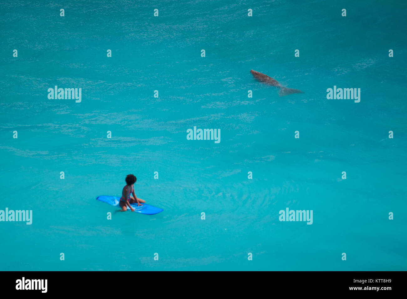 Surfer girl with afro hairstyle sitting on surfboard in crystal clear green water looking at sea cow at Uluwatu - Stock Image